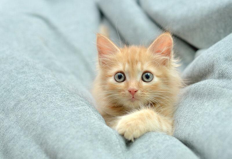 Спасенный котенок Баки
