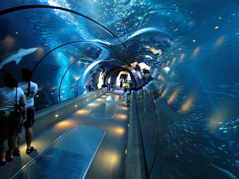 Shedd-Aquarium.jpg