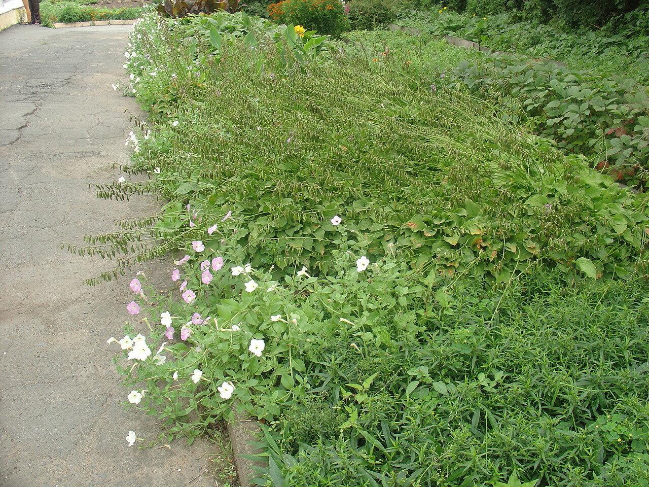 Владивосток, Ботанический сад, 14 августа 2010,