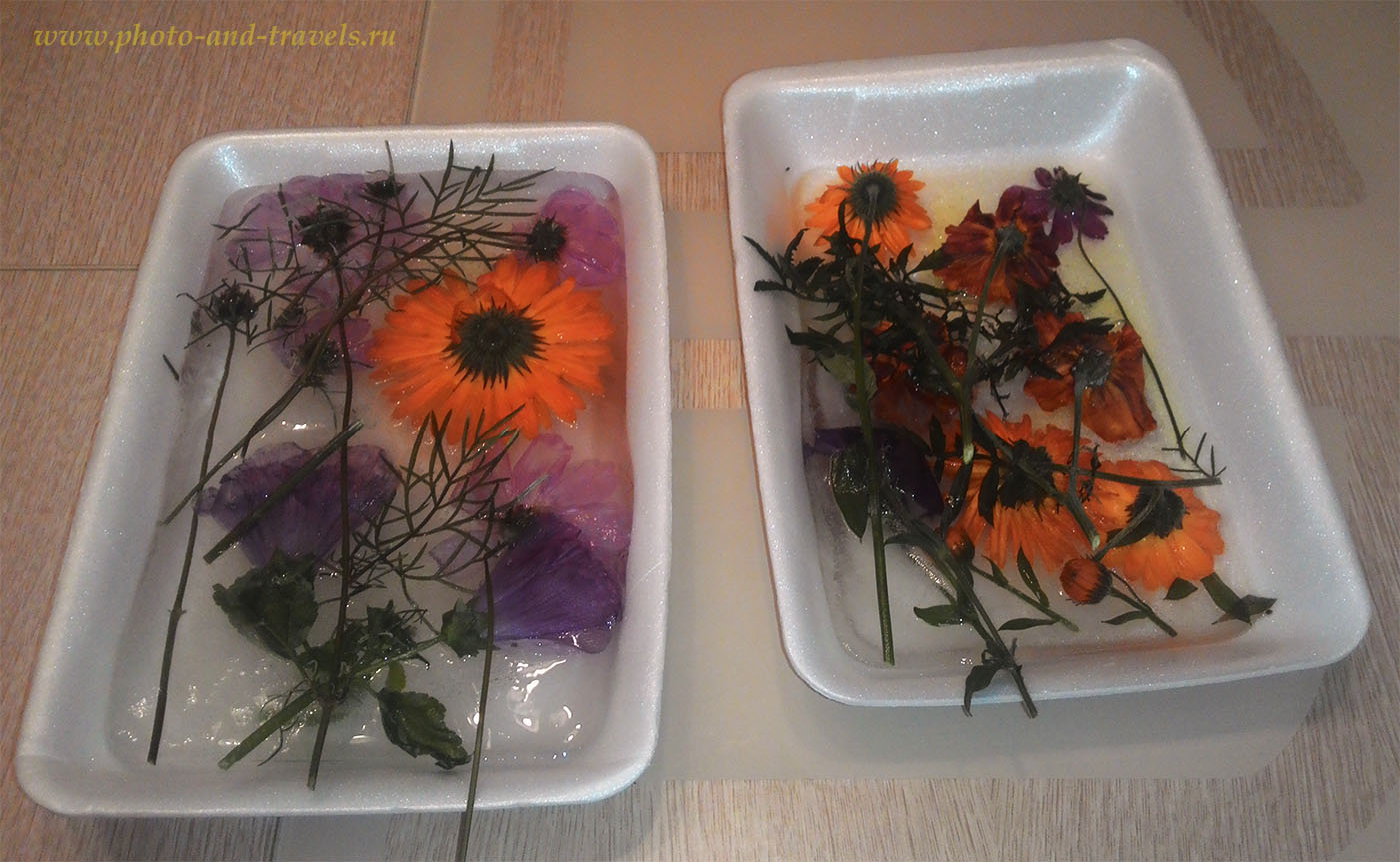 1. Для съемки ледяного натюрморта замораживаем цветы в 2 этапа, чтобы образовался слой льда с фронтальной стороны композиции