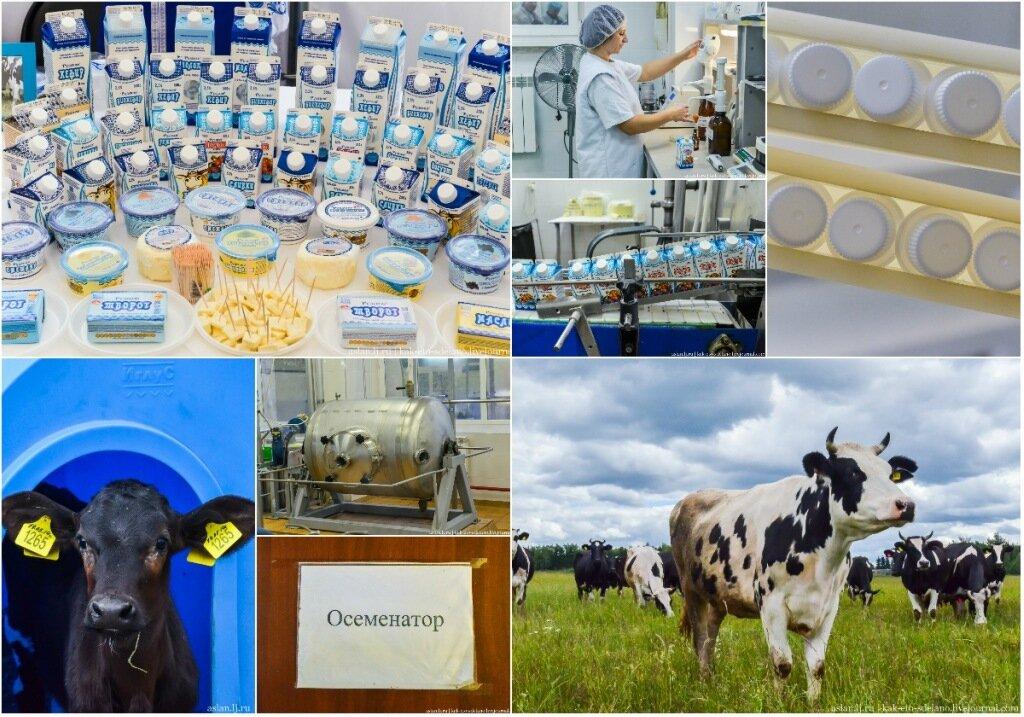 Как производят натуральное молоко в России