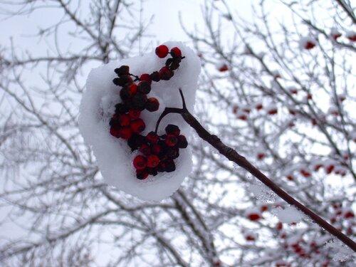 Под снегом...*