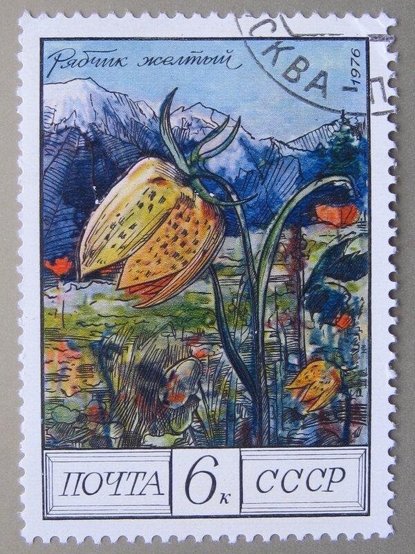 Рябчик желтый (Fritillaria lutea).