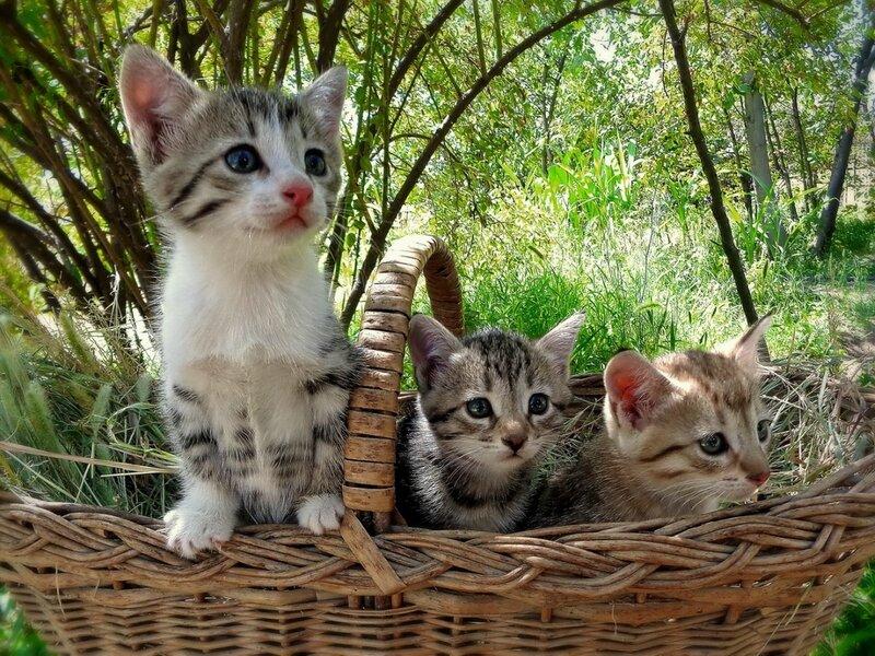 .Кошки в лукошке.