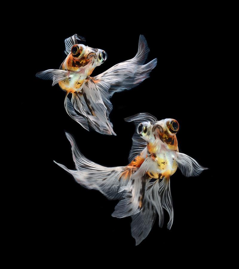 Фотоснимки красивых рыб
