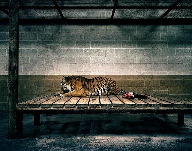 Животные в зоопарке