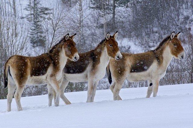 Красоты природы животные 29 фото