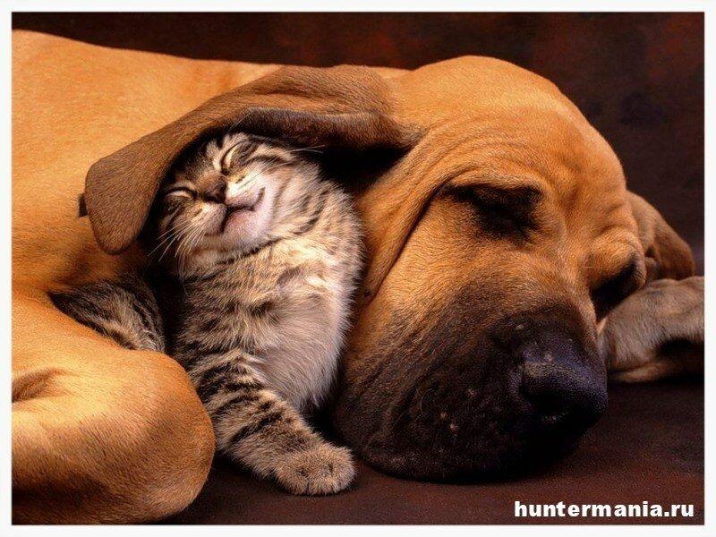 Кошки или собаки. Определяем характер по любимцу