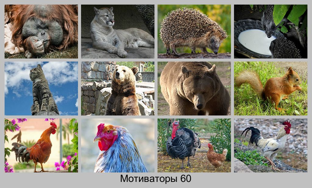 Картинки с надписями про животных