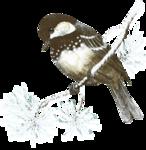 mzimm_snowflurries_bird_a.png