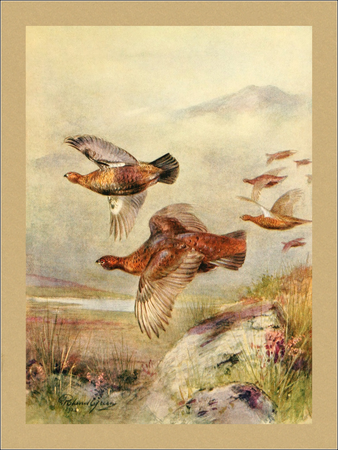 Roland Green, F.Z.S., Birds in flight