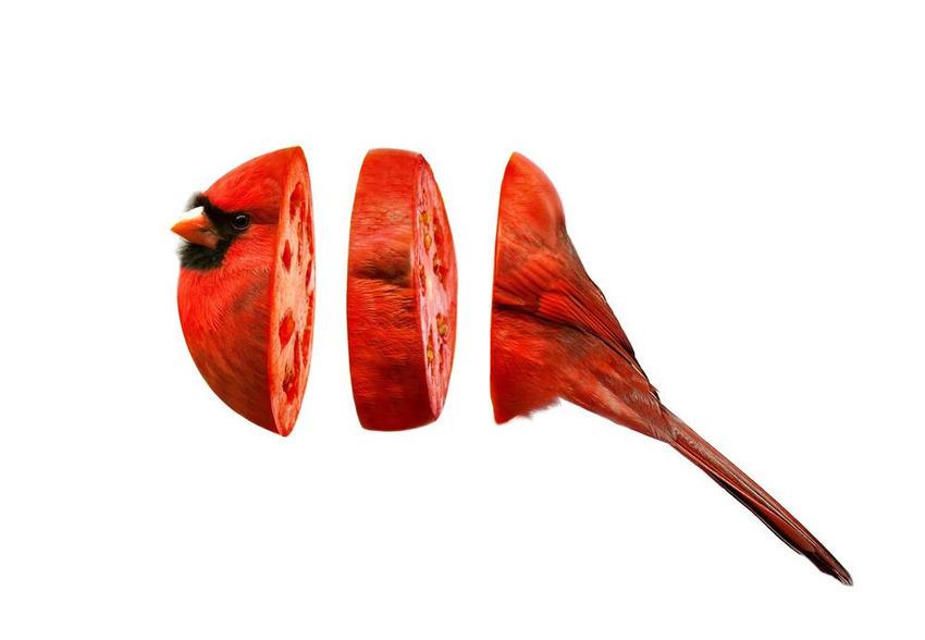 Esli-by-zhivotnyx-skrestili-s-fruktami-i-ovoshhami-9-foto