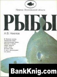Рыбы / Природа Ленинградской области
