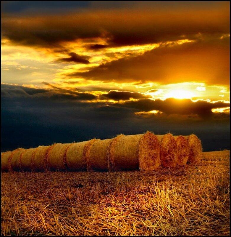 Кукурузные поля