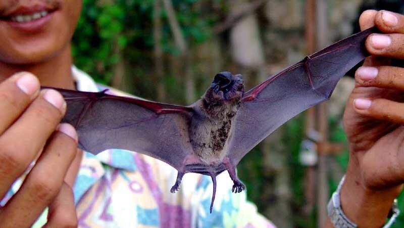 Летучие мыши (Бухта Королевы)