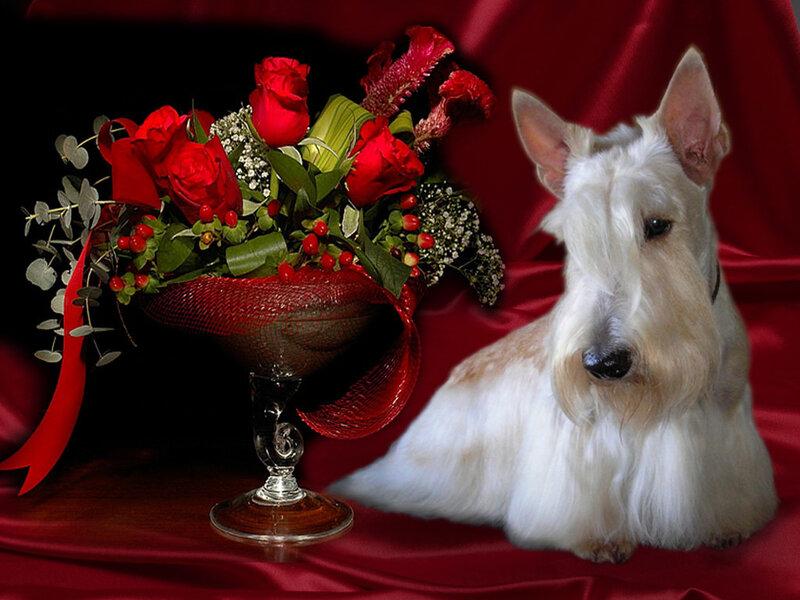 Если вы устали от колтунов, длинных царапающих когтей, небрежно уложенной шерстки - вам нужна стрижка собаки...