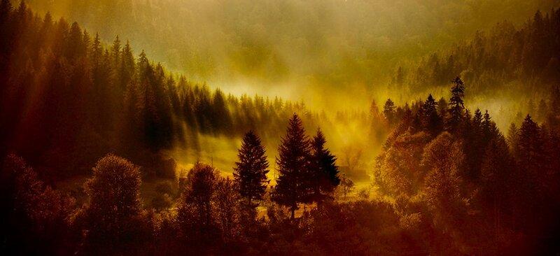 Лишь повиснут над лесом туманы