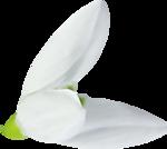 весенние цветы (18).png