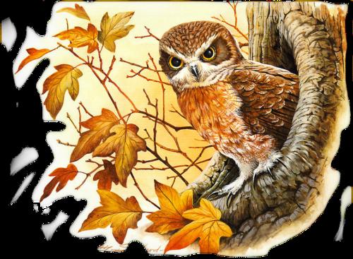 Осенняя сова-1.png
