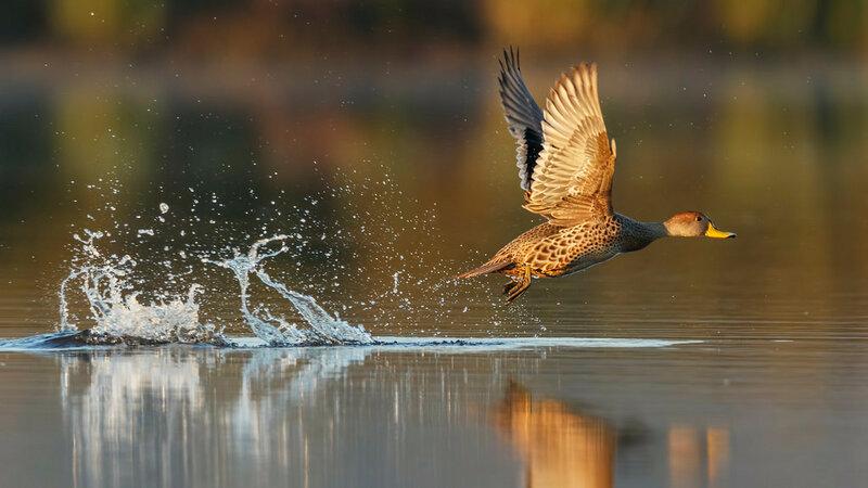 Новые прекрасные фотографии природы и городских сюжетов (Unsplash и Flickr)
