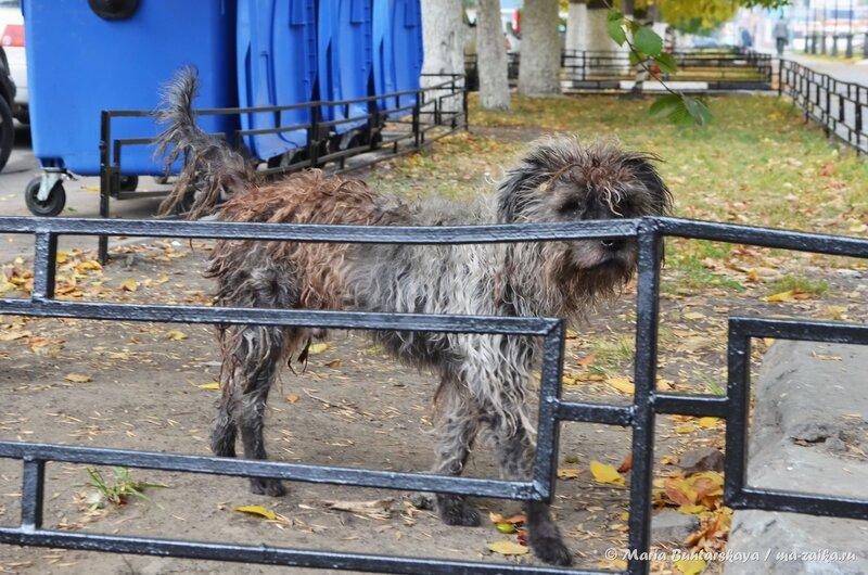 Чудная собака, Саратов, Большая Казачья, 09 октября 2014 года