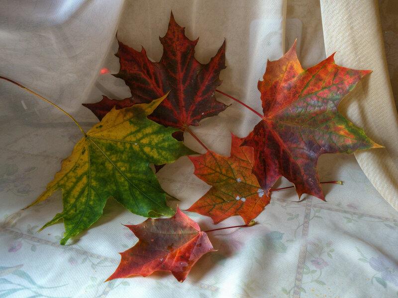 Внесли осень в дом.