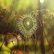 к чему снятся бегущие за мной пауки