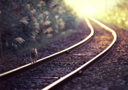 JeeBee — «опять по шпалам..домой..по привычке..» на Яндекс.Фотках