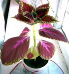 цветок2.jpg