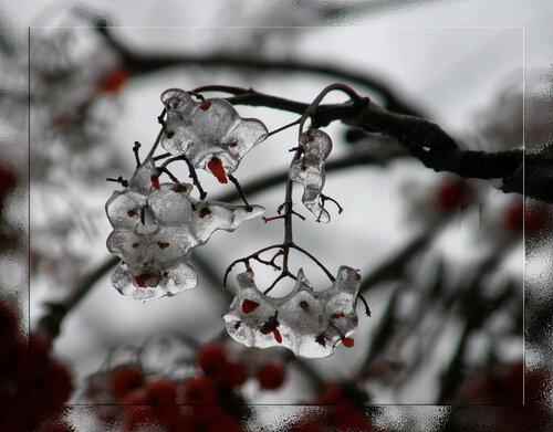 ледяные ягоды