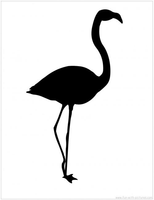Бывает ли черный фламинго?