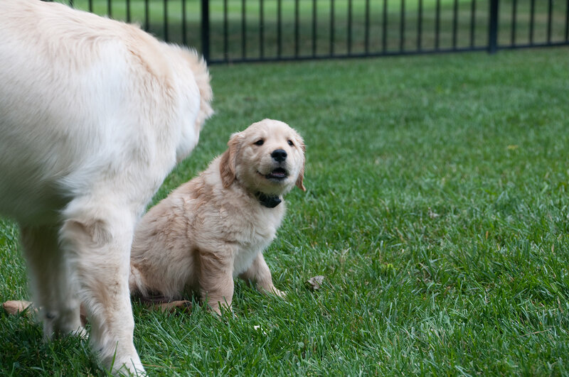 The first moments when Buddy met his new brother, Watson