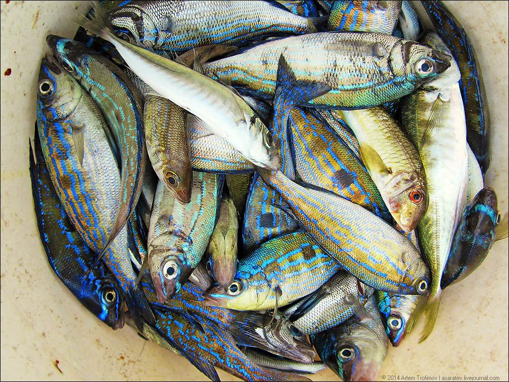 севастополь рыбалка с яхты