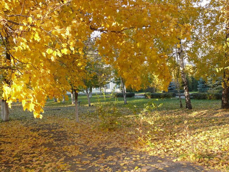 Последние листья в этом сезоне... (2).JPG