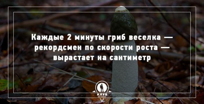 Факты о грибах