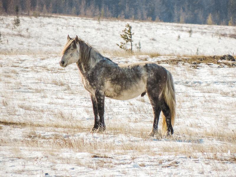 Конь на свободе
