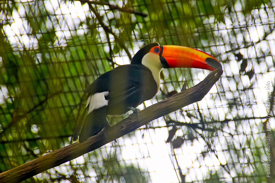 0 c4fdb 42f2c51c orig Парк птиц Jurong в Сингапуре