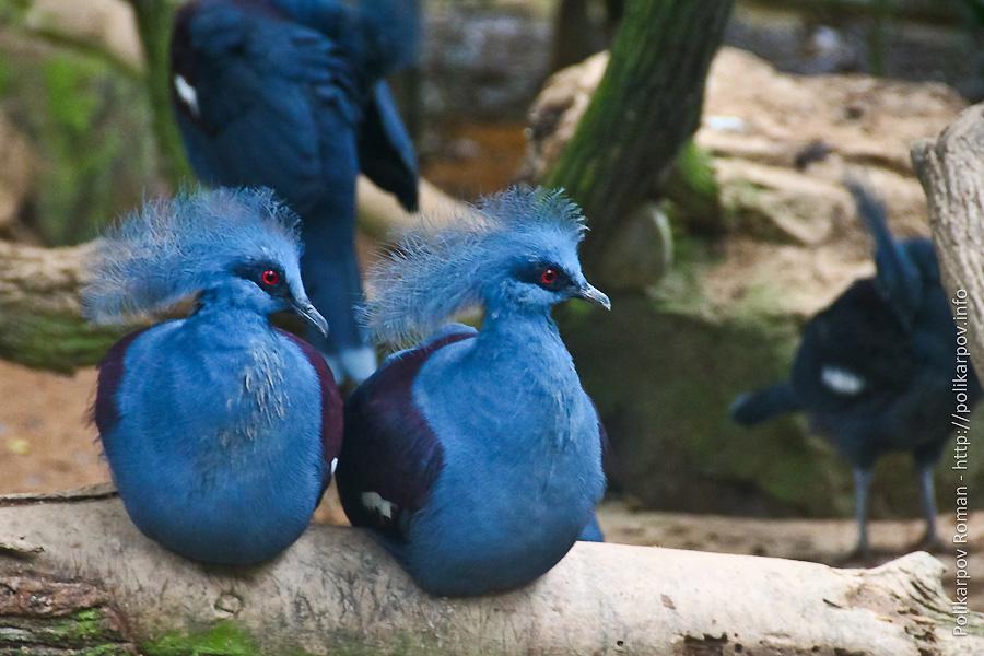0 c4fdd aafa67d3 orig Парк птиц Jurong в Сингапуре