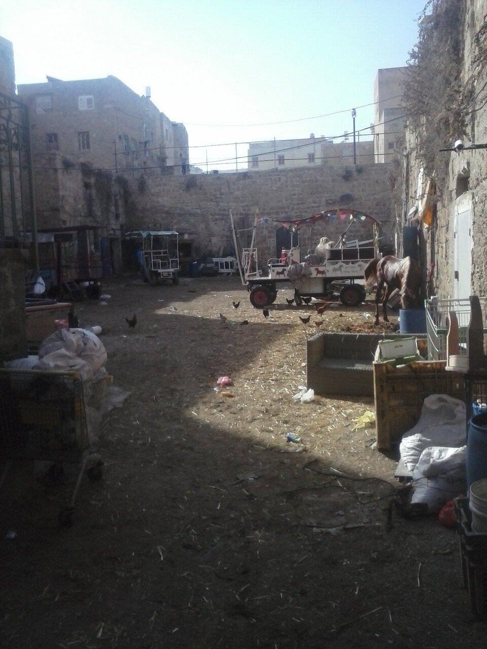 Арабский дворик похож на зоопарк: смешались в кучу верблюды, лошади, арабы, курицы