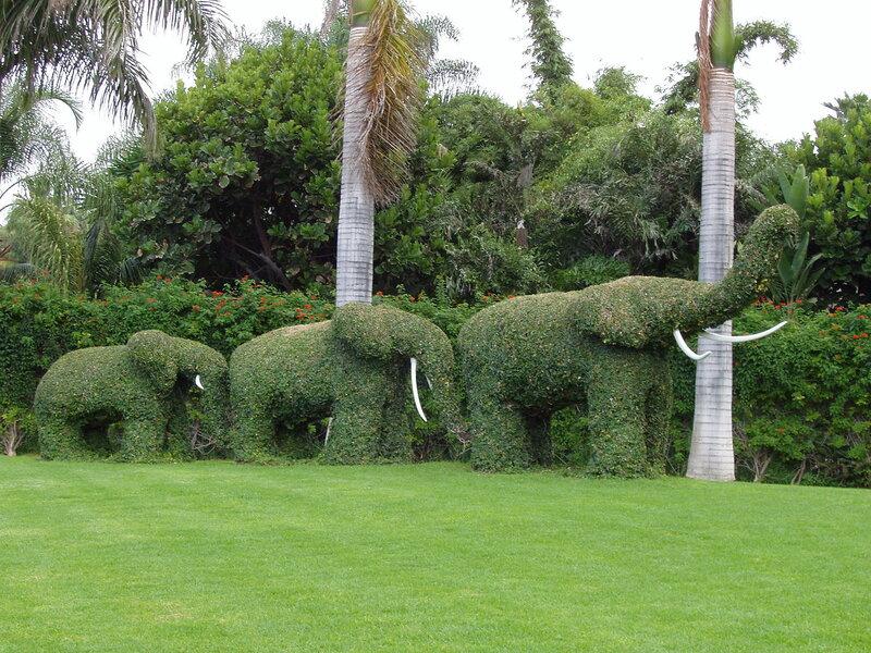 А Вы видели зеленых слонов?)))