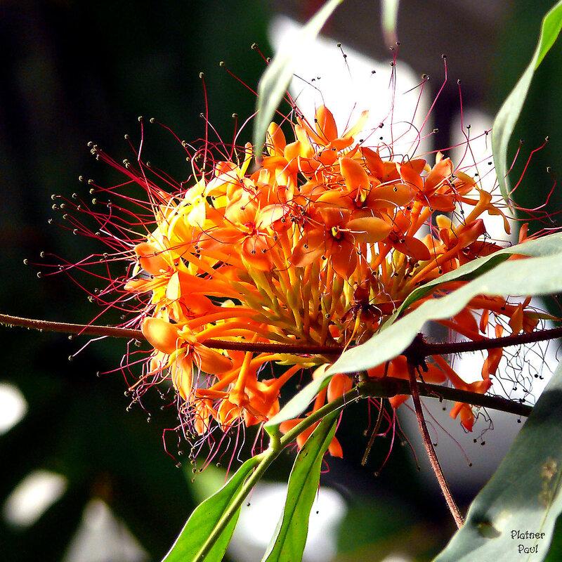 Экзоты ботанического сада