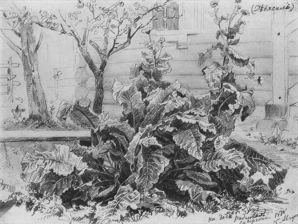 Лопухи. 1878 23х32.jpg