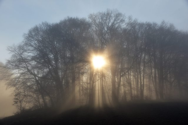 The sun rises behind a forest shrouded in fog near Baunatal, Germany, 08 December 2015. (Photo by Uw