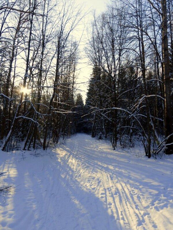 Лыжня на просеке