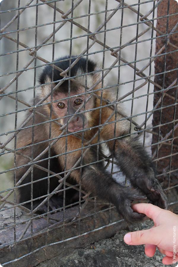 Маленькая обезьянка в клетке. Кхао-Кхео. Тайланд
