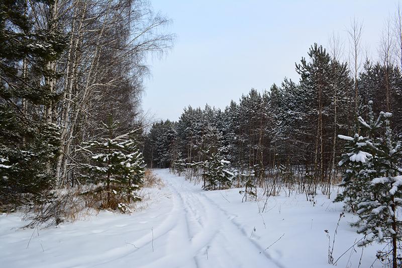 зимний лес 3