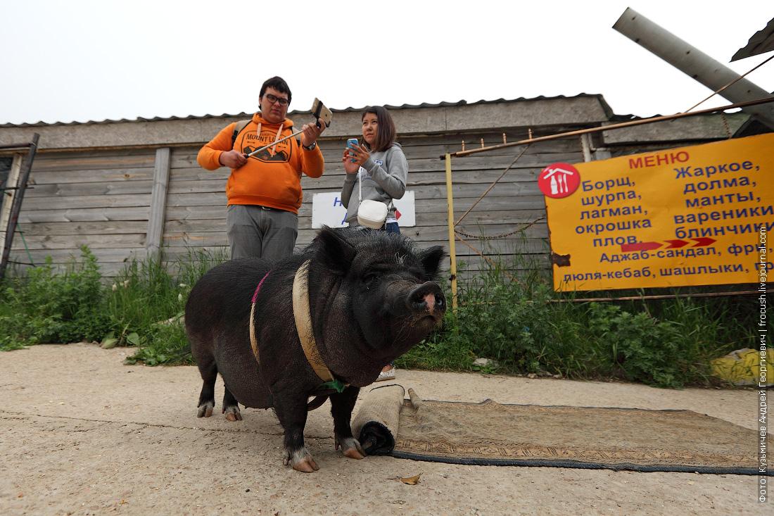 свинка Чуня на Ай-Петри