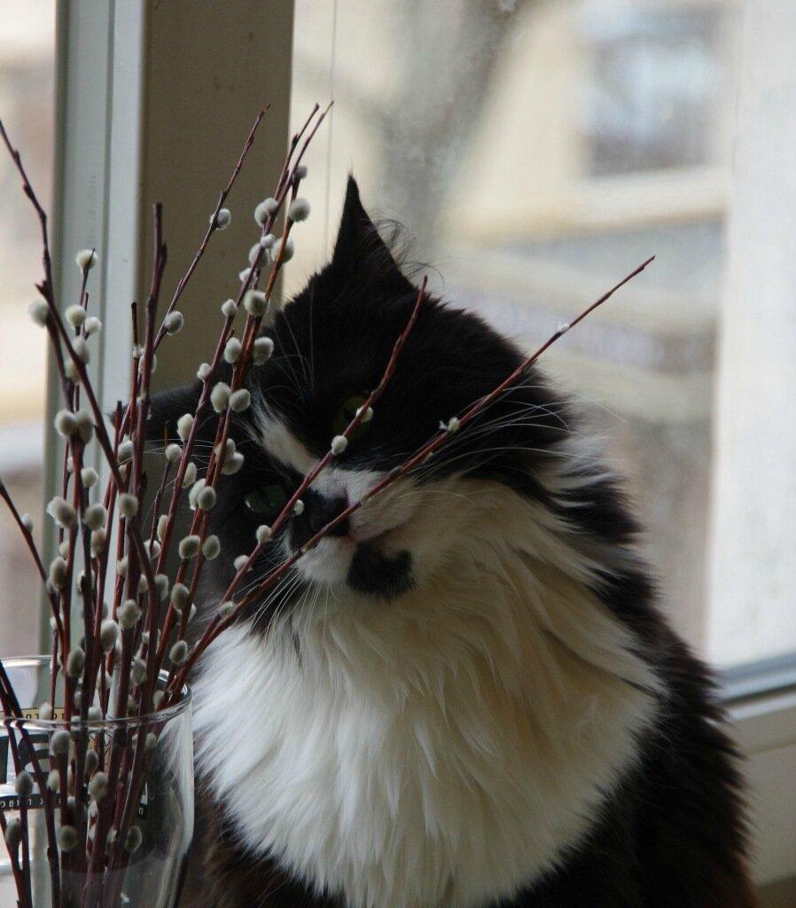 кошки, весна