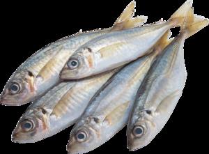 промысловая рыбка