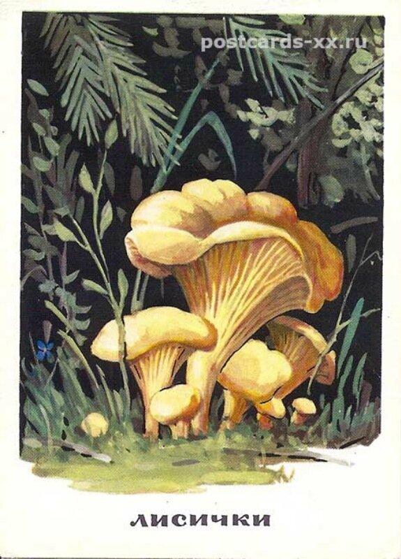 Праздничные открытки с грибами